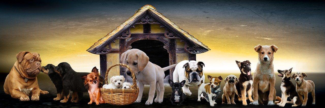 Gründung deiner Hundeschule