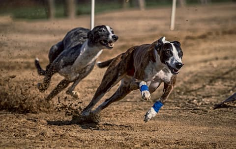 Rennhundausbildung Hundeschule