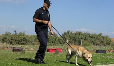 Spürhundausbildung Hundeschule