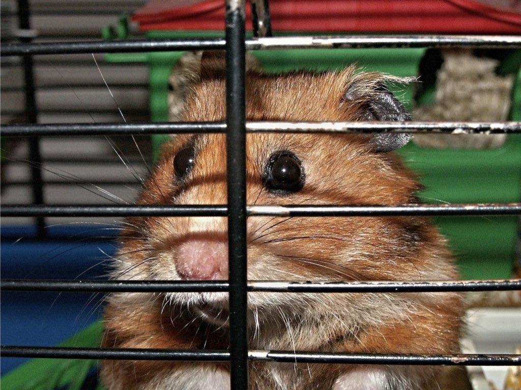 Im Hamsterrad gefangen